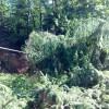 Maltempo, rami cadono per incuria 577 mln mq verde