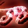 Ebola, Soldati Usa di rientro dall'Africa in quarantena a Vicenza