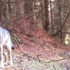 """Lessinia: presentato il progetto """"Wolfalps"""" per convivenza possibile tra bestiame e lupi"""