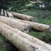 Nasce il nuovo sistema di commercializzazione in rete del legno trentino