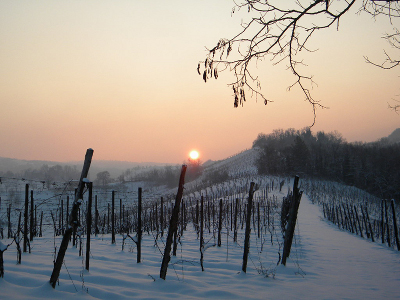 tramonto-neve-vigneti-web