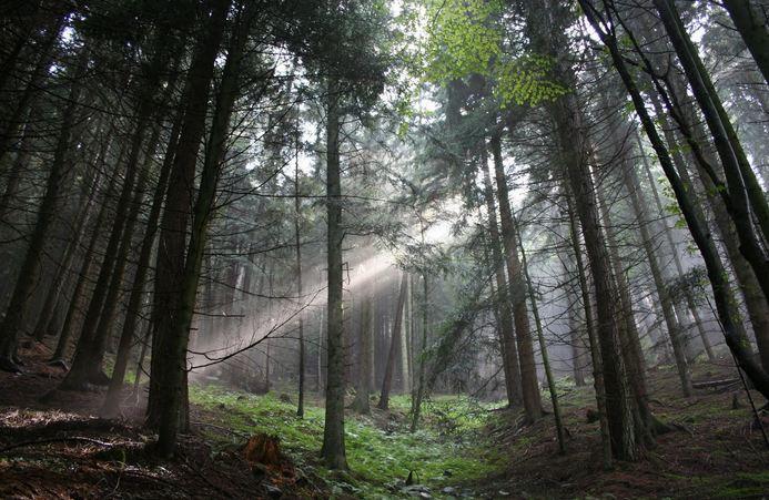 bosco trento