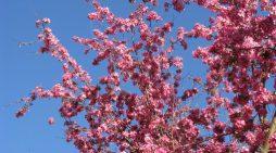 Dolomiti Meteo: tempo primaverile fino a Pasqua, peggiora da Pasquetta