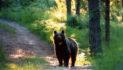 Trento, aggredito da un orso: non è grave. Governatore Rossi chiede cattura animale