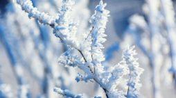 Brina, gelo e freddo pungente: mano ai cappotti