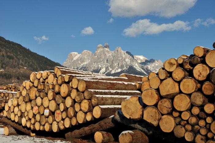 Nasce la carta d'identità del legno trentino: per identificare l'origine e certificarne la provenienza