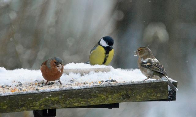 uccellini inverno