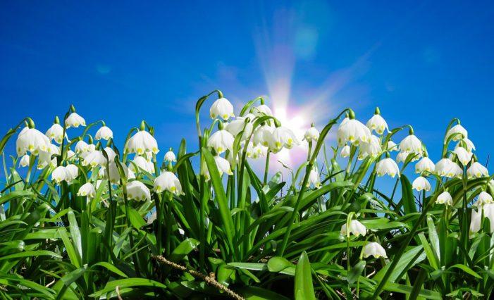 Inverno addio, oggi è l'equinozio di primavera