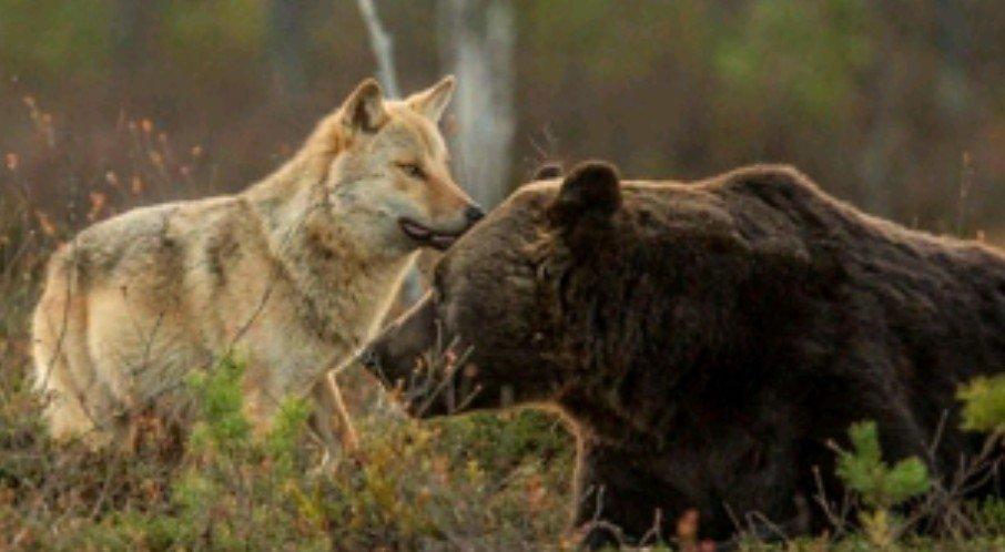 ministro costa dopo visita in trentino alto adige 39 lupi e