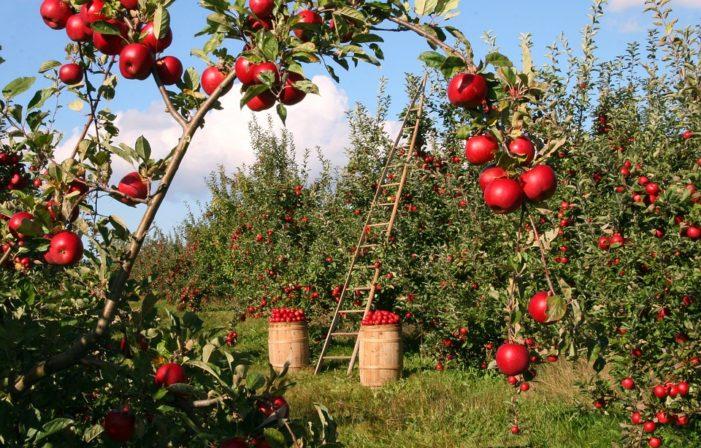 Frutta e verdura 'brutte', l'Ue scarta 50 mln tonnellate l'anno