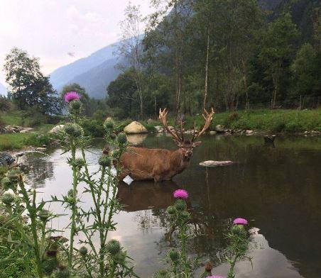 Valle del Vanoi, Dopo il ritorno dei cervi nell'area faunistica di Caoria la comunità lancia la raccolta fondi per ricostruire l'oasi naturale: ecco come sostenere l'iniziativa