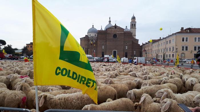 Mille pecore invadono Padova: protesta dazi di Coldiretti