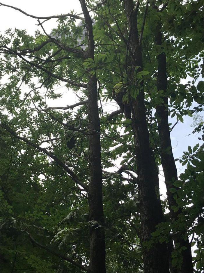 Incidente in volo a Roncegno, Recuperato un parapendio sul monte Zaccon: illeso il pilota